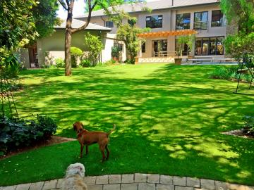 Synthetic grass in Kyalami Estate