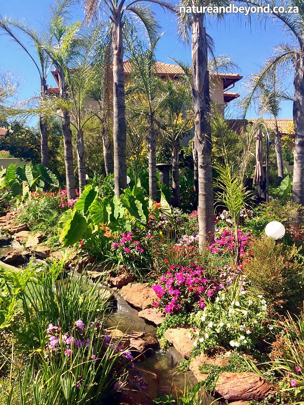 Tropical bali johannesburg garden design landscapers for Garden design johannesburg